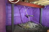 purple spray foam insulation in basement walls with wires hanging from ceiling